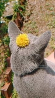 動物のクローズアップの写真・画像素材[3507409]