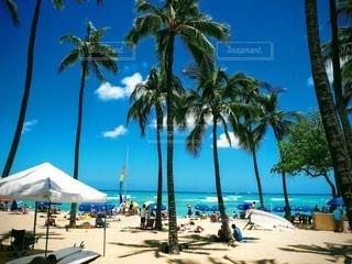 浜辺のヤシの木の写真・画像素材[3519096]