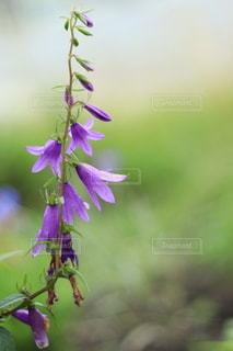 花のクローズアップの写真・画像素材[3525258]