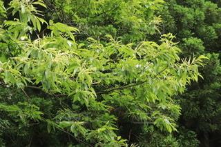 森の中の緑の植物の写真・画像素材[3529437]