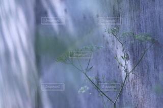 花のクローズアップの写真・画像素材[3544908]