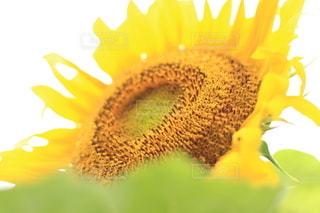 花のクローズアップの写真・画像素材[3548688]