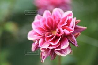 花のクローズアップの写真・画像素材[3583908]