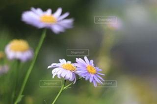花のクローズアップの写真・画像素材[3587585]