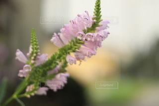 花のクローズアップの写真・画像素材[3589465]
