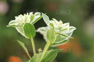 植物のクローズアップの写真・画像素材[3589468]