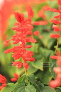 花のクローズアップの写真・画像素材[3589477]