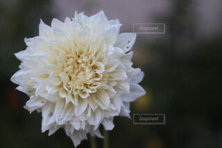 花のクローズアップの写真・画像素材[3622666]