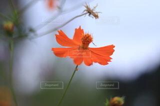 花のクローズアップの写真・画像素材[3622671]