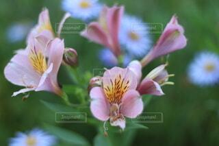 花のクローズアップの写真・画像素材[3622695]