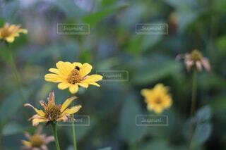 花のクローズアップの写真・画像素材[3622710]
