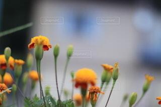 花のクローズアップの写真・画像素材[3622715]