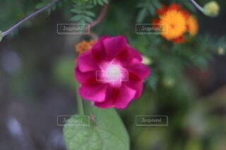 花のクローズアップの写真・画像素材[3622723]