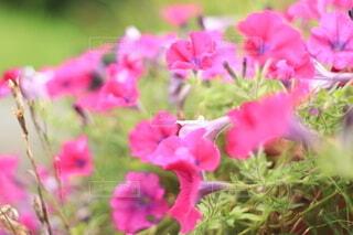花のクローズアップの写真・画像素材[3647454]