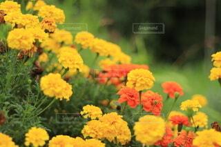 花のクローズアップの写真・画像素材[3647478]