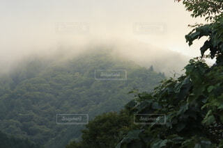 背景に山のある木の写真・画像素材[3647544]