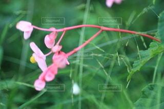 植物の上のピンクの花の写真・画像素材[3666298]