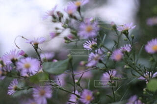 植物の上の紫色の花の写真・画像素材[3666486]