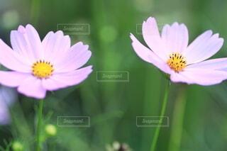 花のクローズアップの写真・画像素材[3673823]