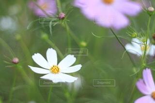 花のクローズアップの写真・画像素材[3673830]