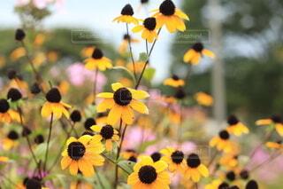 花のクローズアップの写真・画像素材[3693340]