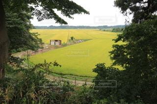 緑豊かな丘の中腹の側に木がある道の写真・画像素材[3694867]