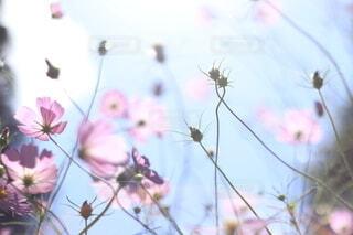 植物の上のピンクの花の写真・画像素材[3698094]