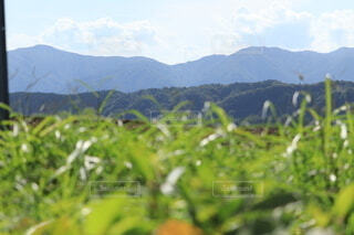 背景に山のある茂みのグループの写真・画像素材[3698171]