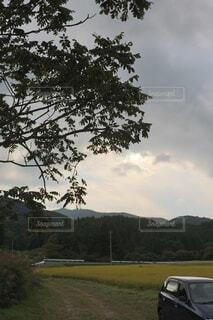 木のクローズアップの写真・画像素材[3710178]