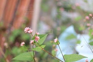 花のクローズアップの写真・画像素材[3763687]