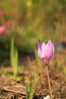 花のクローズアップの写真・画像素材[3795869]