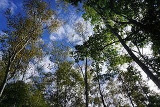 水上宝台樹キャンプ場で迎えた朝の写真・画像素材[3516805]