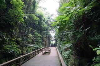 緑に囲まれた遊歩道の写真・画像素材[3519293]