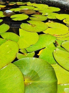 池のクローズアップの写真・画像素材[4385531]