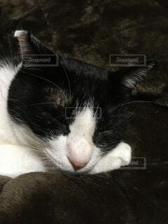 猫の写真・画像素材[3875757]