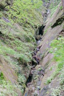 登山道の側に木がある道の写真・画像素材[3513924]