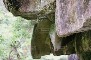 森の中の大きな木の写真・画像素材[3513943]