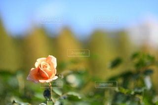 花のクローズアップの写真・画像素材[3514439]