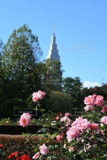 植物の上のピンクの花の写真・画像素材[3514444]