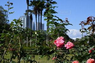 木に花の花瓶の写真・画像素材[3514441]