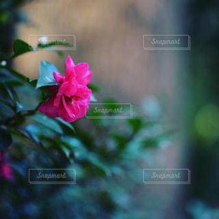 花のクローズアップの写真・画像素材[3514713]
