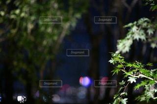 木のクローズアップの写真・画像素材[3514716]