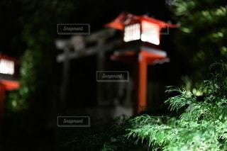 いくつかの茂みのクローズアップの写真・画像素材[3514718]