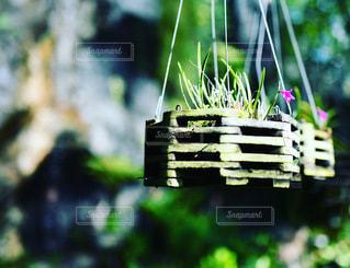 植物のクローズアップの写真・画像素材[3514776]