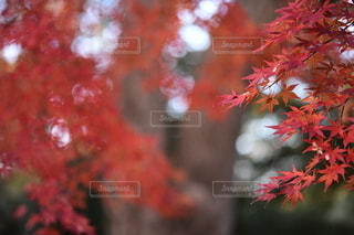 花のクローズアップの写真・画像素材[3514778]