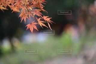 植物のクローズアップの写真・画像素材[3514772]