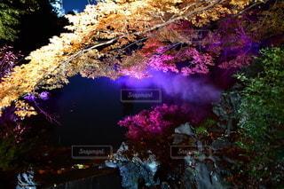 木々に囲まれた川の写真・画像素材[3514781]
