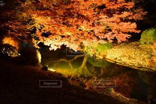森の眺めの写真・画像素材[3514785]