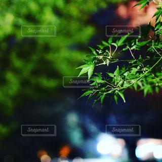 花のクローズアップの写真・画像素材[3514783]