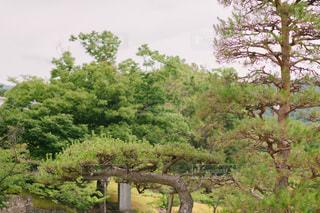 木の隣に立っている大きな象の写真・画像素材[3515629]